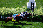 May 3, 2014: Coffee Clique (top), ridden by Javier Castellano beats Dame Marie, ridden by Irad Ortiz, Jr. in the Churchill Distaff Turf Mile S. (Grade II) stakes on Kentucky Derby Day at Churchill Downs in Louisville, KY. Jon Durr/ESW/CSM