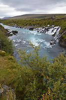"""Hraunfossar, """"Lavawasserfälle"""", Wasserfälle in den Fluss Hvítá in der Nähe der Orte Húsafell und Reykholt im Westen Islands, Auf einer Länge von ca. 700 Meter strömt in über hundert kleinen Wasserfällen schäumend und sprudelnd Wasser aus dem schwarzen Gestein des ca. 1.000 Jahre alten Lavafeldes Hallmundarhraun, waterfalls in the west of Iceland"""