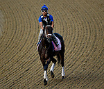 LOUISVILLE, KY - MAY 03: Kelly's Humor, trained by Brad Cox, exercises in preparation for the Kentucky Oaks at Churchill Downs on May 3, 2018 in Louisville, Kentucky. (Photo by John Vorhees/Eclipse Sportswire/Getty Images)
