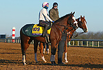 Tiz The Law, trained by trainer Barclay Tagg, exercises in preparation for the Breeders' Cup Classic at Keeneland Racetrack in Lexington, Kentucky on November 3, 2020.