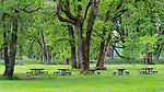 Picnic Tables.  Green dominates the color pallet at Champoeg State Heritage Area (Champoeg State Park), in Oregon's Willamette Valley south of Portland, Oregon