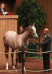12 September 2011.Hip #136 Candy Ride - Wickedly Wise filly sold for $535,000.
