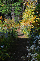 The trail to Clayton Lake in the fall.