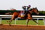 October 22, 2015:  Yahilwa, trained by James Cassidy, and owned by D.P. Racing LLC, is entered in the Breeder's Cup Longines Distaff Grade 1 $2,000,000.  Candice Chavez/ESW/CSM