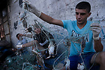 Palestinian fishermen sort out crabs from on the shore of the Mediterranean Sea in Gaza City on September 6, 2019. Photo by Osama Baba