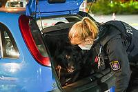 Büttelborn 08.05.2021: Alkohol- und Drogenkontrolle<br /> Hundeführerin mit Schutz- und Spürhund Django kontrolliert ein Fahrzeug<br /> Foto: Vollformat/Marc Schüler, Schäfergasse 5, 65428 R'heim, Fon 0151/11654988, Bankverbindung KSKGG BLZ. 50852553 , KTO. 16003352. Alle Honorare zzgl. 7% MwSt.