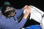 Marilyn Spalding Working On Whooping Crane Injury