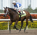 10 January 2010: West Ocean and Jockey John Velaquez after the Marshua's Rover Stakes at Gulfstream Park in Hallandale Beach, FL.