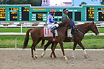 January 16, 2016: Potomac River with Juan P. Vargas up in the Col. E.R. Bradley Handicap race at the Fairgrounds race course in New Orleans Louisiana. Steve Dalmado/ESW/CSM