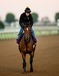 October 31, 2020: Bon Raison, trained by trainer Jack Sisterson, exercises in preparation for the Breeders' Cup Sprint at Keeneland Racetrack in Lexington, Kentucky on October 31, 2020. Alex Evers/Eclipse Sportswire/Breeders Cup