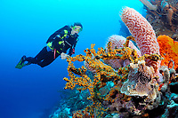 Scuba diver views sponge and coral, Bonaire, Netherlands Antilles, Caribbean, Atlantic, MR