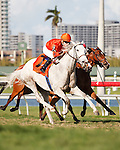 Tapitsfly(7) with jockey Julien Leparoux up get by Bay to Bay(2) and La Reine Lionne(9) on their way to winning the Honey Fox Stakes(G2T) at Gulfstream Park. Hallandale Beach, Florida. 03-18-2012