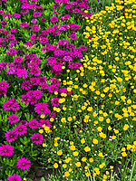 Yangzhou, Jiangsu, China.  Flower Garden in the Slender West Lake Park.