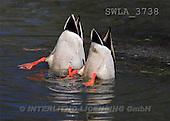 Carl, ANIMALS, wildlife, photos(SWLA3738,#A#)