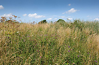 19.7.2021 Field margin<br /> ©Tim Scrivener Photographer 07850 303986<br />      ....Covering Agriculture In The UK....