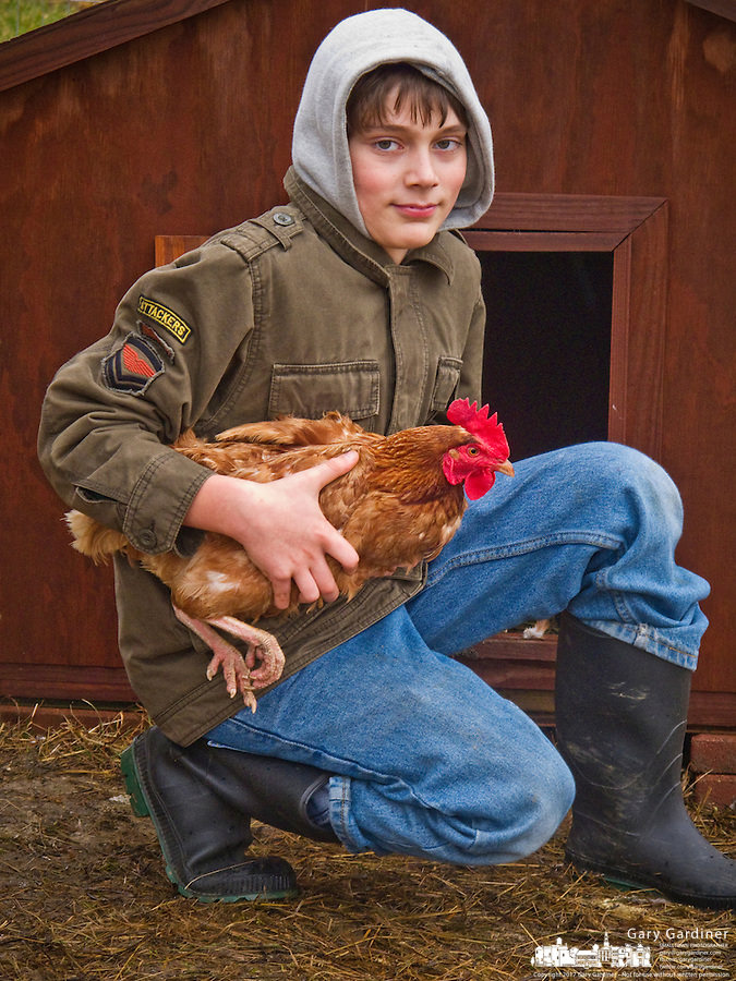 Kneeling young boy holds chicken outside its coop after Thanksgiving meal.