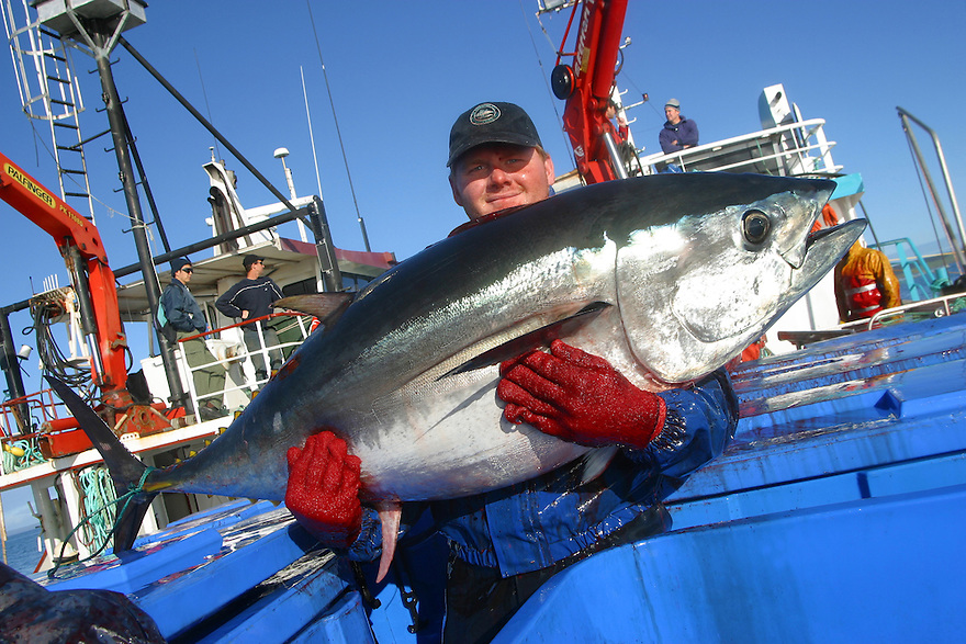 Aquaculture tuna farming Port Lincoln South Australia