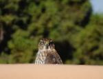 Birds of the High Desert