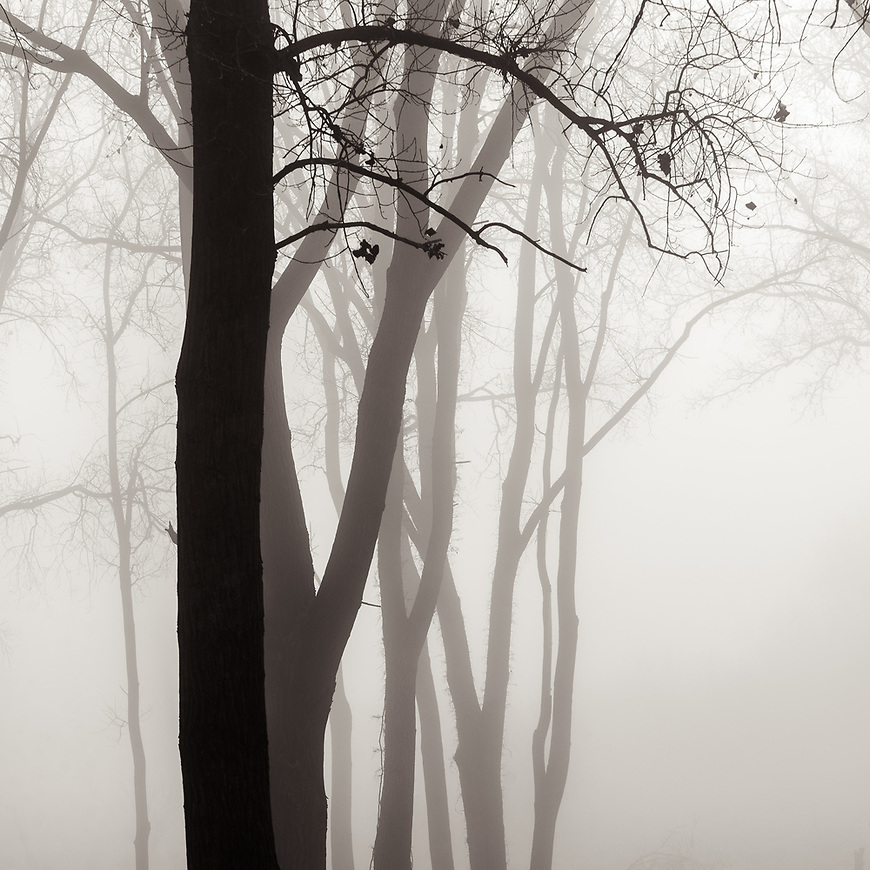 """I was delighted to learn today that """"Forest Fog"""" is one of two images of mine that have been shortlisted by the Royal Photographic Society as finalists for their 160th International Print Exhibition in London. Here's hoping they make the final cut! #michaelknapstein #midwest #midwestmemoir #blackandwhite #B&W #monochrome #instblackandwhite #blackandwhiteart #flair_bw #blackandwhite_perfection #motherfstop #wisconsin #blackandwhiteisworththefight #bnw_captures #bwphotography #myfeatureshoot  #fineartphotography #americanmidwest #squaremag #lensculture #rps #royalphotographicsociety #ipe160"""