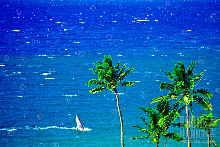 A windsurfer sails along the blue waters off beautiful Wailea Beach with the tops of coconut palms in the foreground.