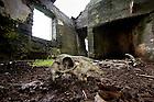 June 7, 2012; Ruins of a home on Inishark Island, Ireland..Photo by Matt Cashore/University of Notre Dame