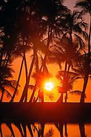 sunset in palm trees, Kailua-Kona, Hawaii, Pacific Ocean