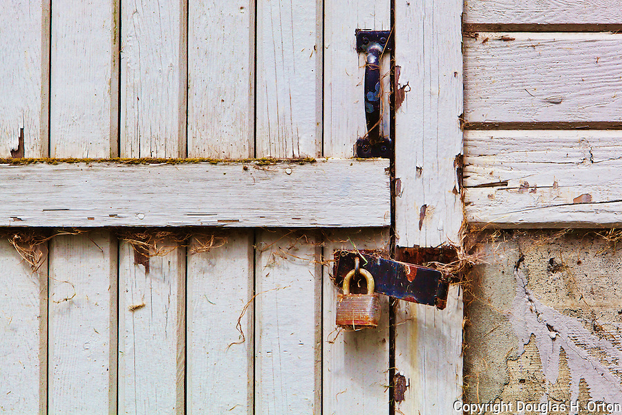 Old barn door with padlock and spider webs hangs of hinge, Nisqually National Wildlife Refuge, Washington State.