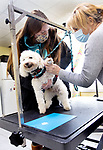 WOLCOTT CT. - 13 January 2020-011321SV01-From left, Dallas Clegg and Jacki Schulman make paw paint prints with Dasher Ray at Wagging Tails Pet Resort & Spa in Wolcott Wednesday. It was Canine Craft Day at the resort. The activity is meant to help dogs become accustomed to having their paws touched, feeling different surfaces and hearing new sounds, while creating a painting their owners can hang on the fridge or have framed.<br /> Steven Valenti Republican-American