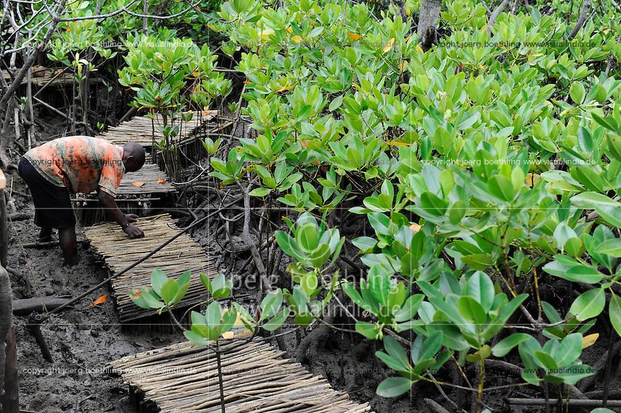 KENYA Mombasa , crab breeding in mangrove forest  for income generation / KENIA , Projekt Kuestenschutz und Katastrophenprevention in Kuestenregion bei Mombasa , Ort Majaoni , Aufforstung von Mangroven, Kaesten fuer Krabbenzucht als Einkommensfoerderung