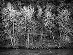 Bare trees in late winter along the Mokelumne River near Electra, Amador County, Calif.