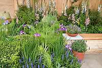 Patio landscaping mixture of food plants and perennial flowers, herb vegetable Fennel, digitalis, boxwood Buxus, pots of herbs thymus thyme, verbena, herbs iris, garden bench, pot containers, flowers and herbs interplanted