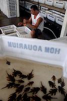 """AntÙnio Wilson de Souza Cruz, 34 anos, Cearense de Madalena trabalha a sete selecionando peixes para exportaÁ""""o, todos os dias classifica milhares deles que s""""o retirados do rio Xingu por uma das dezenas de empresas de exportaÁ""""o de peixes ornamentais do Xing˙..<br /> Altamira, Par·, Brasil.<br /> 10/02/2006<br /> Foto Paulo Santos/Interfoto"""
