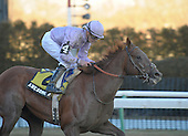 Awesome Act wins the 2010 Gotham Stakes for 3-year-olds at Aqueduct Race Track in Ozone Park, N.Y., on March 6