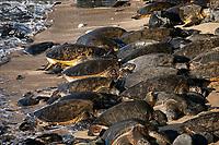 Sea turtles on beach at Hookaipa. Maui, Hawii