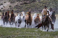 cowboy ranch horse roundup Cowboys working and playing. Cowboy Cowboy Photo Cowboy, Cowboy and Cowgirl photographs of western ranches working with horses and cattle by western cowboy photographer Jess Lee. Photographing ranches big and small in Wyoming,Montana,Idaho,Oregon,Colorado,Nevada,Arizona,Utah,New Mexico. Fine Art Limited Edition Photography Of American Cowboys and Cowgirls by Jess Lee
