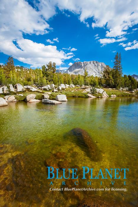 Rafferty Creek, flows under blue skies, on approach to Vogelsang High Sierra Camp,  Vogelsang Peak is seen in the distance, Yosemite National Park, California, USA