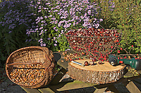 Gesammelte Herbstfrüchte zum Basteln, Kastanien, Eicheln, Weißdorn, Hagebutten, Kastanie, Eichel, Weissdorn, Hagebutte