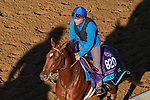 November 3, 2020: Sealiway, trained by trainer Frederic Rossi, exercises in preparation for the Breeders' Cup Juvenile Turf at Keeneland Racetrack in Lexington, Kentucky on November 3, 2020. John Voorhees/Eclipse Sportswire/Breeders Cup/CSM