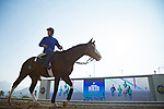 SHA TIN,HONG KONG-DECEMBER 08 : Talismanic,trained by Andre Fabre,exercises in preparation for the Hong Kong Vase at Sha Tin Racecourse on December 8,2017 in Sha Tin,New Territories,Hong Kong (Photo by Kaz Ishida/Eclipse Sportswire/Getty Images)