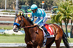 ARCADIA, CA  JULY 4:  #1 Classier, ridden by Mike Smith, returns to the connections after win ning the Los Alamitos Derby (Grade lll) on July 4, 2021 at Los Alamitos Race Course in Los Alamitos, CA.  (Photo by Casey Pnillips/ Eclipse Sportswire/ CSM)