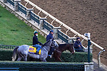 November 3, 2020: Tacitus, trained by trainer William I. Mott, exercises in preparation for the Breeders' Cup Classic at Keeneland Racetrack in Lexington, Kentucky on November 3, 2020. John Voorhees/Eclipse Sportswire/Breeders Cup/CSM