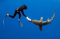 diver fending off oceanic whitetip shark, Carcharhinus longimanus, with pilot fish, Naucrates ductor, Kona Coast, Big Island, Hawaii, USA, Pacific Ocean, MR