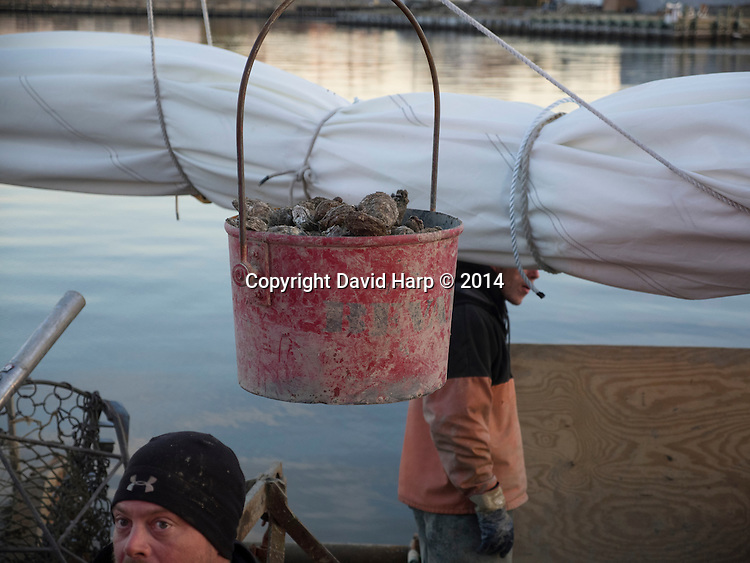 Oysters are off loaded from the skipjack Rebecca T. Ruark , at Long Wharf in Cambridge