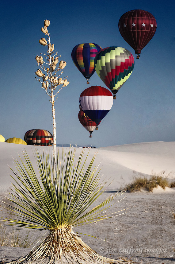 Hot air balloons in an early morning ascension with a yucca in the foreground at White Sands National Monument.