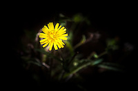 A bright yellow flower beckons.