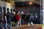 October 26, 2015:  Breeder's Cup Classic hopeful, Honor Code walks the barn after arriving on a flight from New York, pictured here following fellow competitor, Beholder as she walks the barn with her rider after putting in her final morning work in preparation for the Breeder's Cup Classic.  Candice Chavez/ESW/CSM