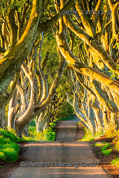 Tom Mackie, LANDSCAPES, LANDSCHAFTEN, PAISAJES, FOTO, photos,+County Antrim, Dark Hedges, Europe, Game of Thrones, Northern Ireland, Tom Mackie, UK, United Kingdom, country lane, nobody,+path, pathways, road, tourist attraction, tree, trees, upright, vertical, yellow,County Antrim, Dark Hedges, Europe, Game of+Thrones, Northern Ireland, Tom Mackie, UK, United Kingdom, country lane, nobody, path, pathways, road, tourist attraction, tr+ee, trees, upright, vertical, yellow+,GBTM190331-2,#L#, EVERYDAY ,Ireland