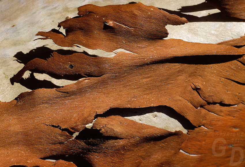 Backgrounds of Wood and Bark