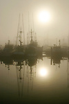 Seattle, commercial salmon boats in fog, sunrise, Fisherman's Terminal, Lake Washington Ship Canal, Interbay, Seattle, Washington State, Pacific Northwest,.