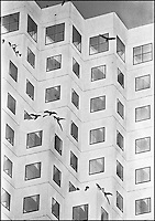 "Vultures on a County court building.<br /> From ""Miami in Black and White"" series<br /> Downtown Miami, FL"